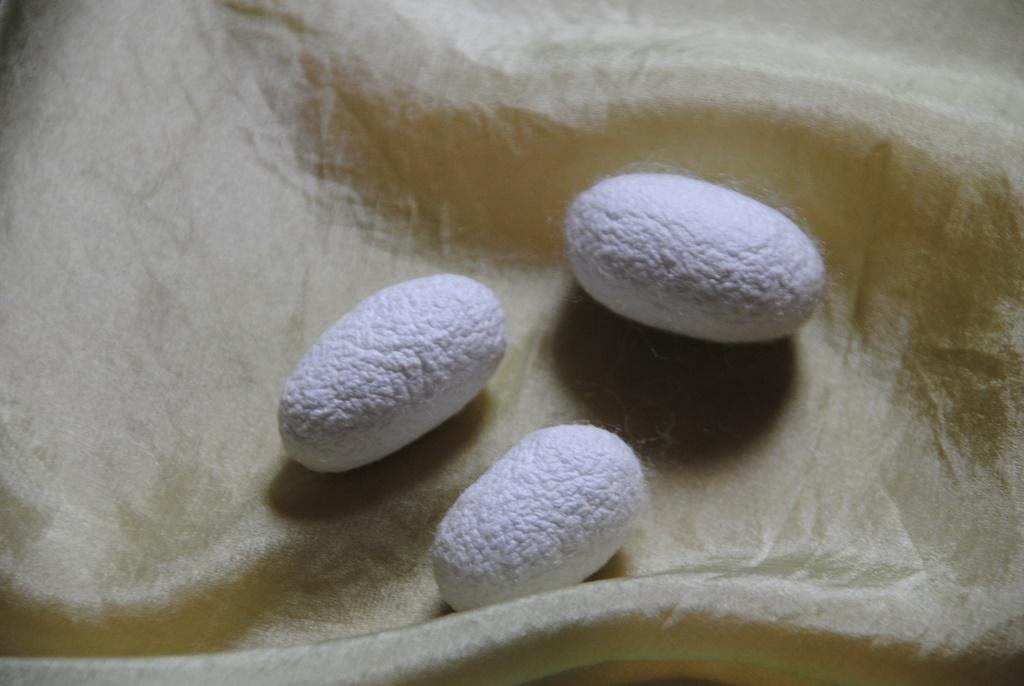 Seidenkokon auf schilfgefärbter Seide