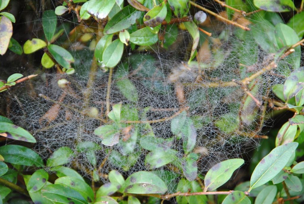 Spinnennetz auf dem Friedhof