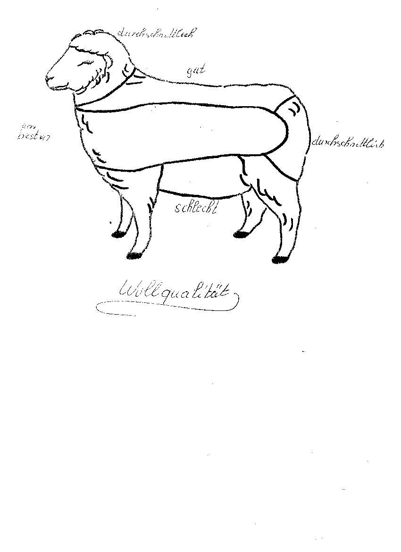 Wollqualität bei Schafen