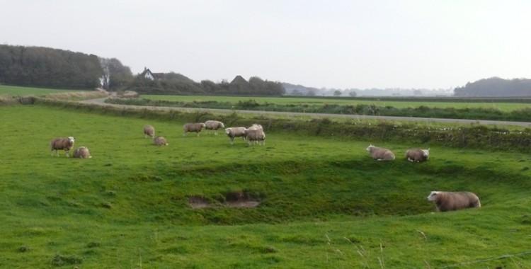 Schafe im Oktober