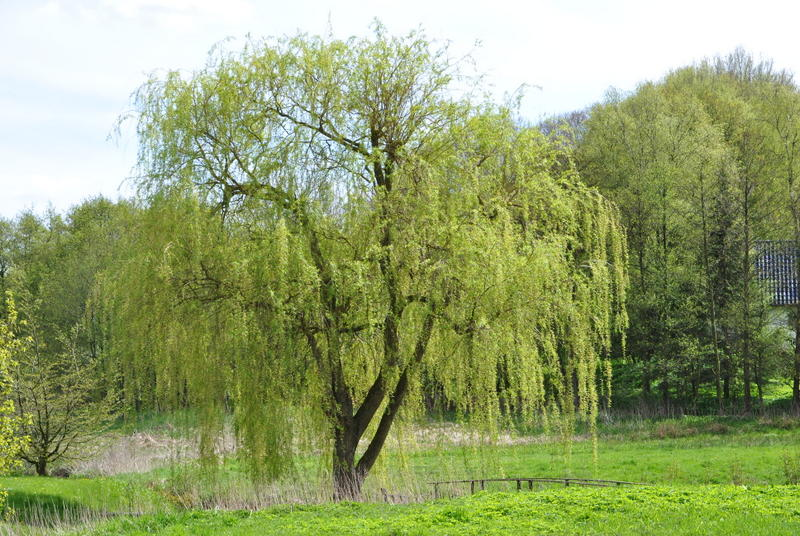 Weide im FrühlingWeide im Frühling
