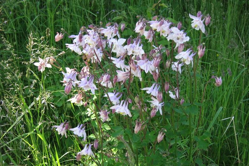 Sommerblumen in Schweden