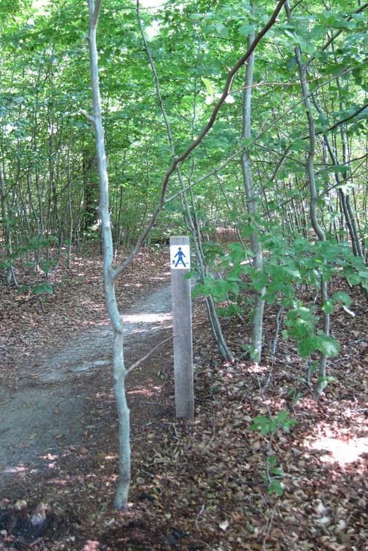 Der Weg führte auchdurch Wälder
