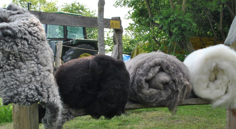 Farben seiner Wolle