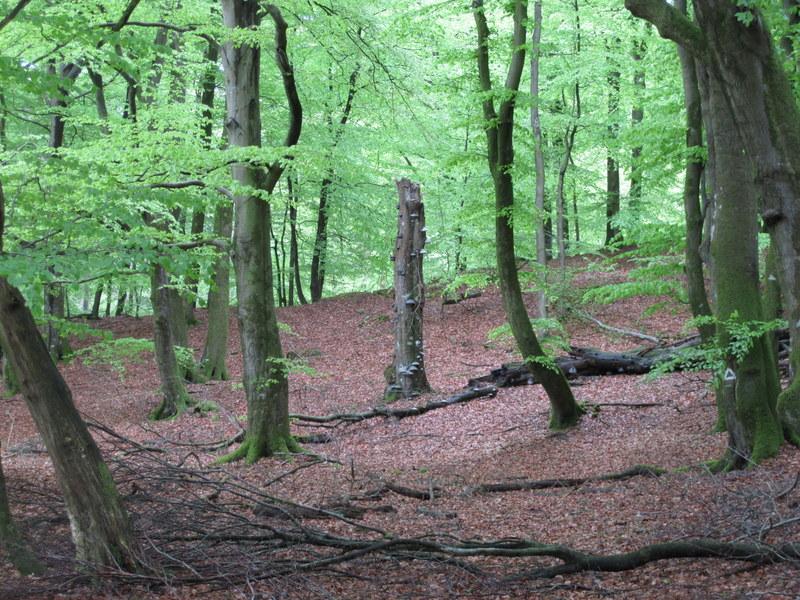 Im Idstedter Wald, schöner märchenhafter Wald