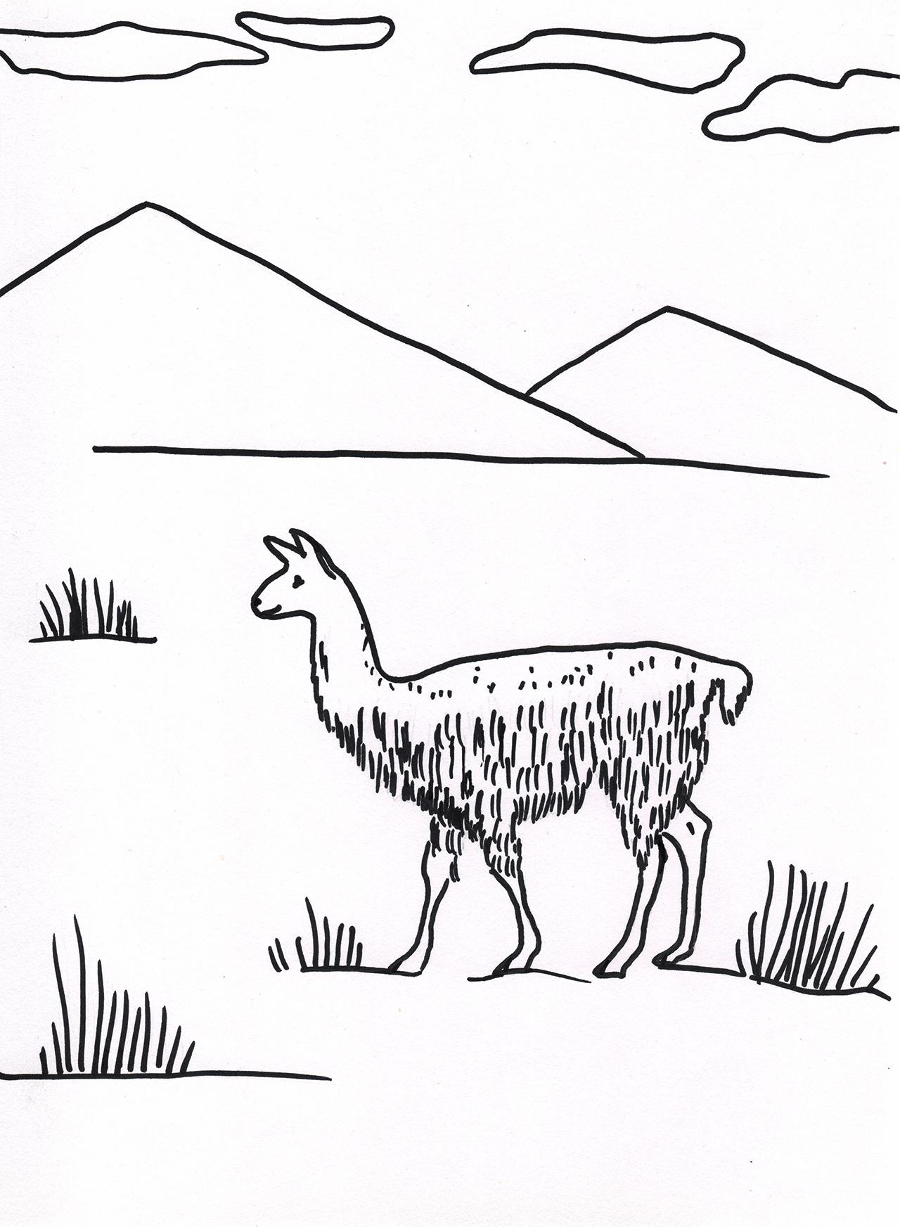 Lama zum ausmalen