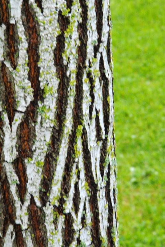 Ein Baum in Schleswig