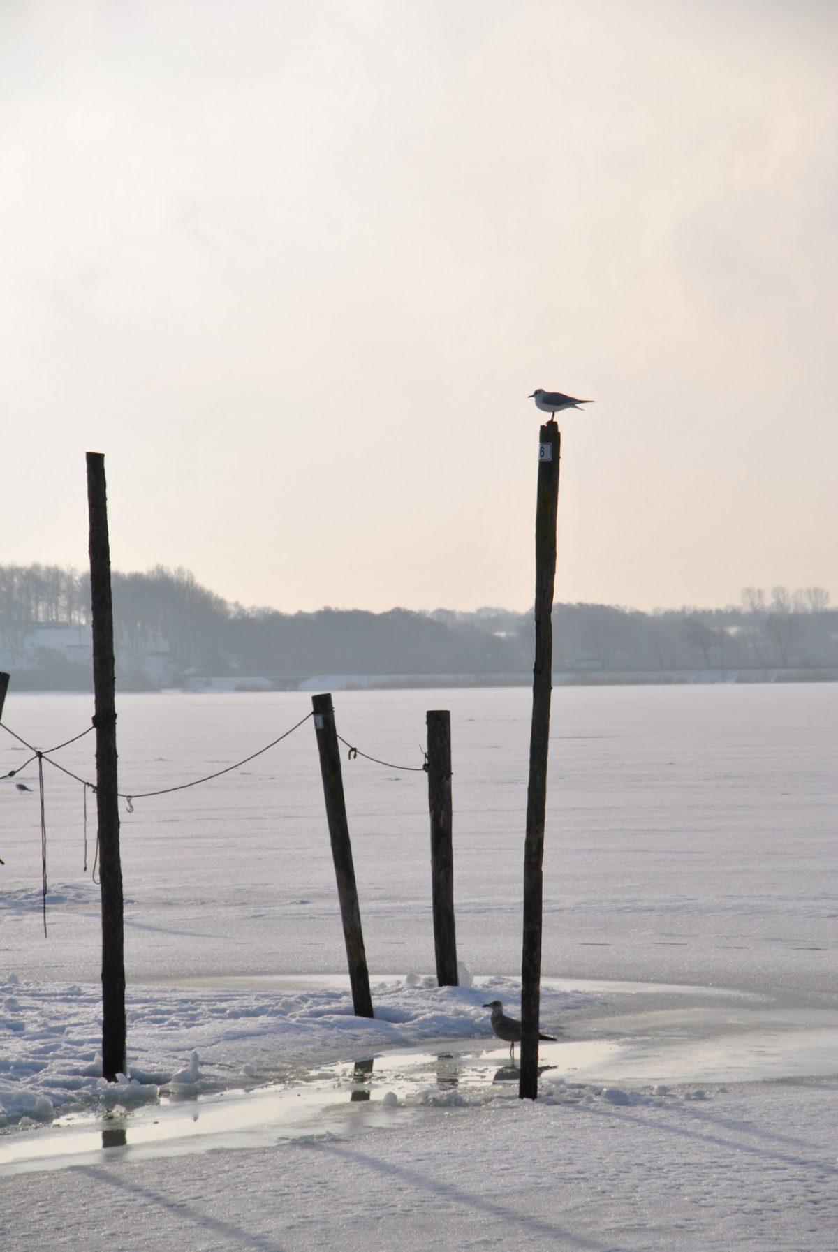 Die Schlei in Schleswig 2010