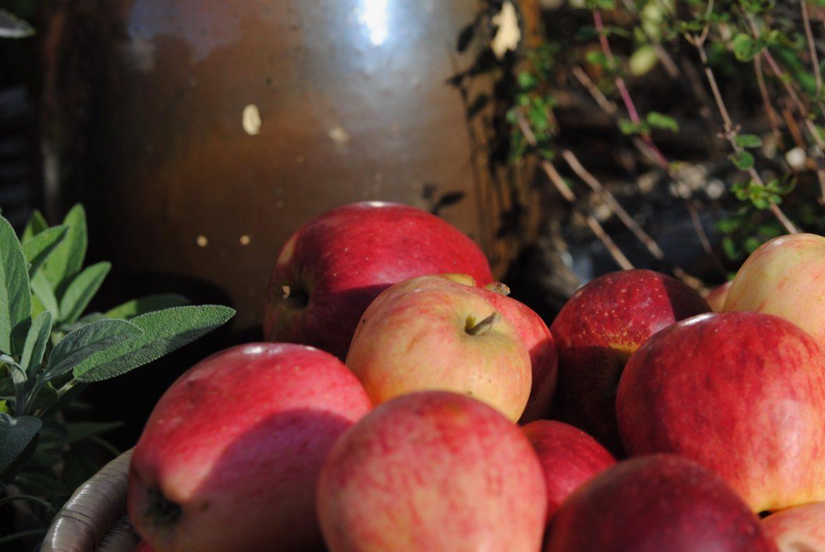Geschenkte leckere Äpfel