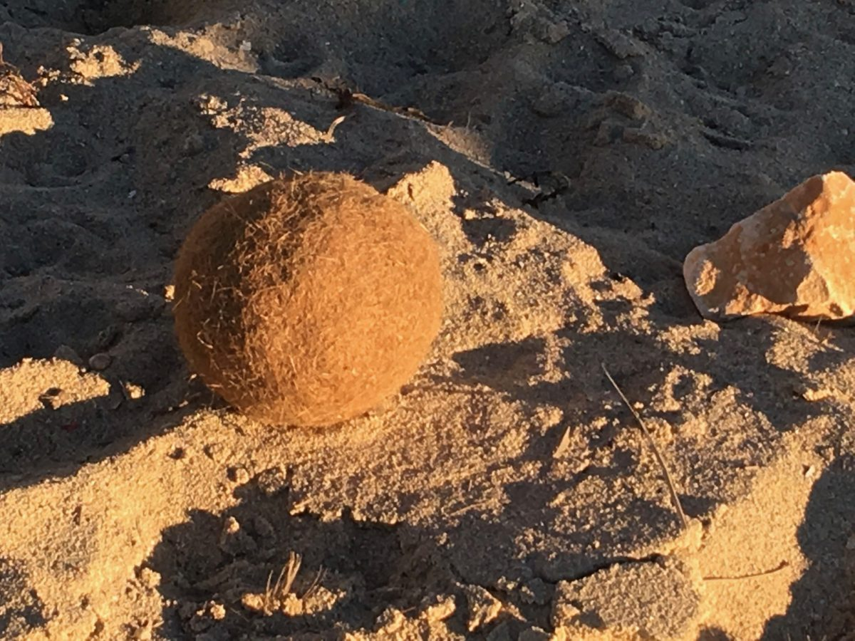 Neptun-Ball am Strand von Palma